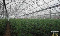 Крестьянско-фермерское хозяйство в районе города-курорта анапа краснодарского края