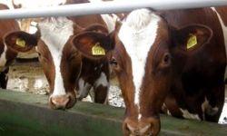Сельхозпредприятие (ферма)