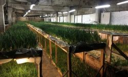 Производство лука с большой посадочной площадью