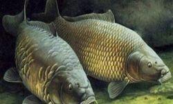 Действующий бизнес по производству рыболовных товаров