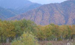Охотничьи угодья в Камчатском крае