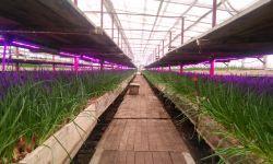 Тепличное хозяйство с высокой производительностью
