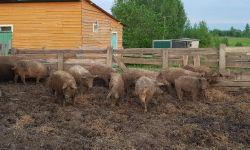 Действующее фермерское хозяйство