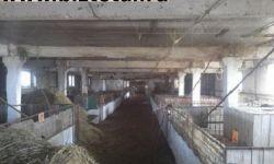 Ферма (здание свободного назначения) с земельным участком