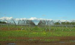 Тепличный комплекс тоннельных пленочных рассадно-овощных теплиц
