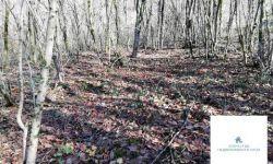 Дача с земельным участком (Лесная поляна-2)