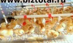 Действующая птицефабрика с многомиллионным оборотом