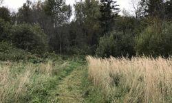 Земельный участок (деревня Михалево)