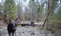 Охотничье хозяйство «Горское».
