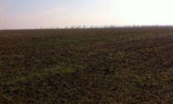 Земельный участок 1050 Га (пашня)