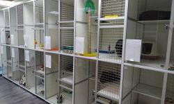 Гостиница для кошек (работающий прибыльный бизнес)