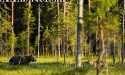 Продам участок с лесом 70га для охот.угодий или другого