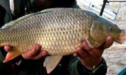 Рыбный бизнес с рыбным рыбный фондом 45 тонн