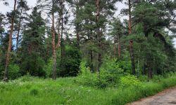 Продаем участок 276 соток в сосновом лесу