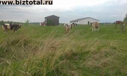 Фермерское хозяйство (молочная ферма)